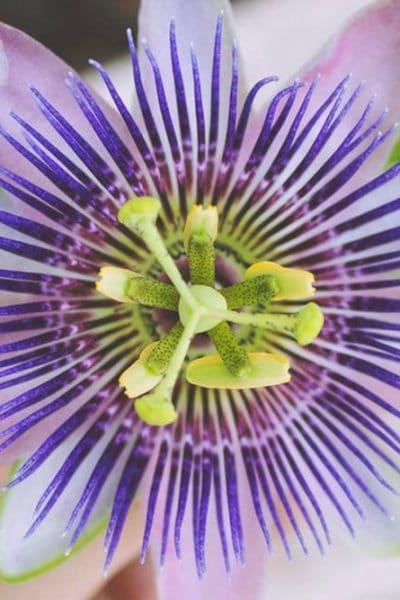 7 raisons pour consulter un herboriste