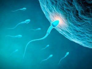 fécondation de l'ovule