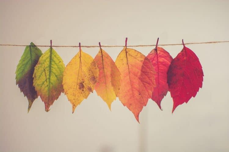 L'automne, moment idéal pour renforcer son système immunitaire