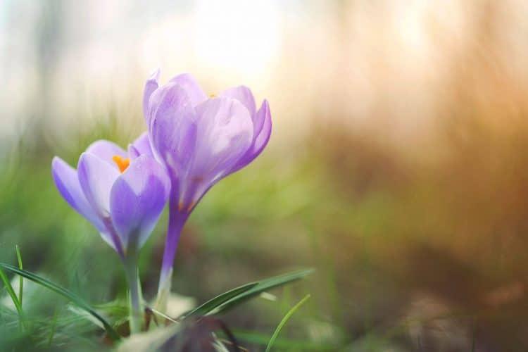 Le printemps, l'éveil de la nature